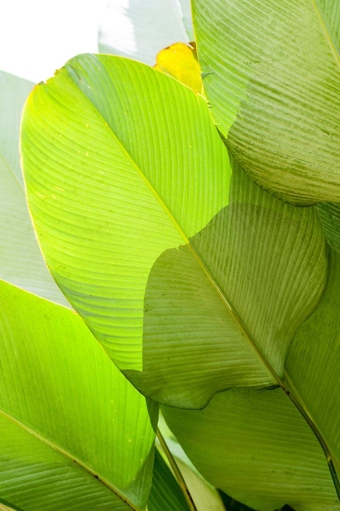 Palm / Indonesia