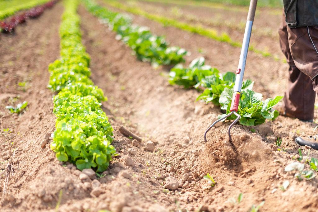 La Finca Farm / Belgium