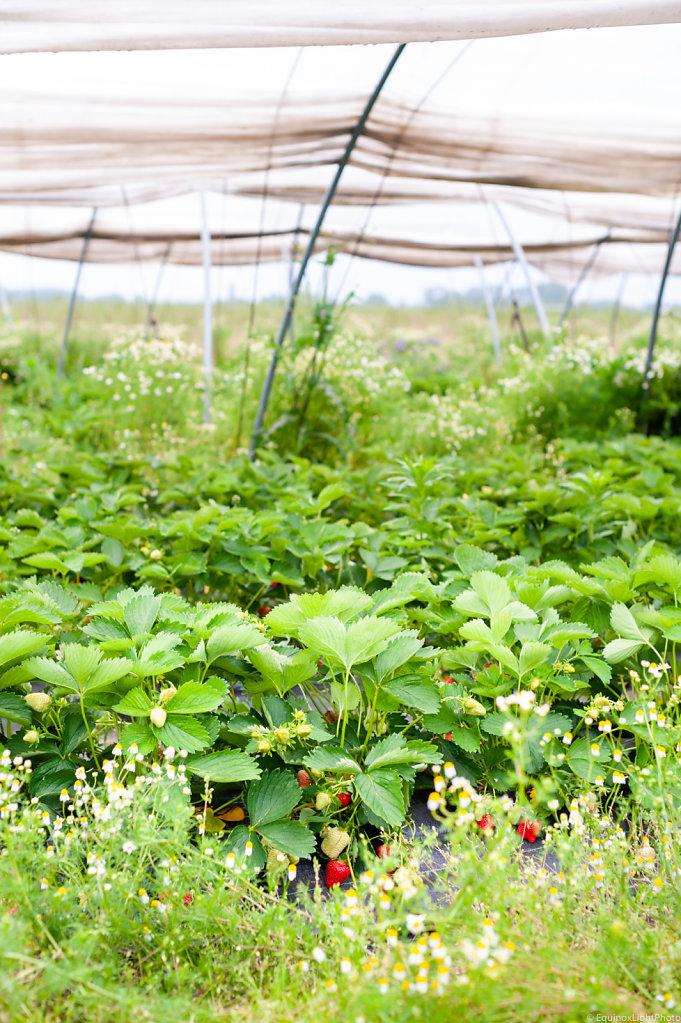 Legumes à la Ferme Farm / Belgium